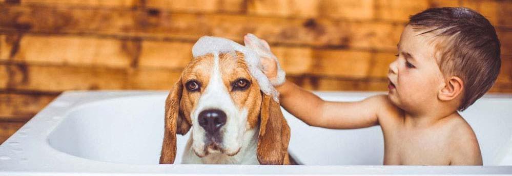 Shampoo en haaruitval 2